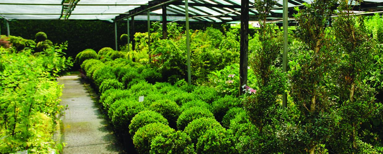 Vendita piante giardino venezia e padova gardin piante - Piante x giardino ...