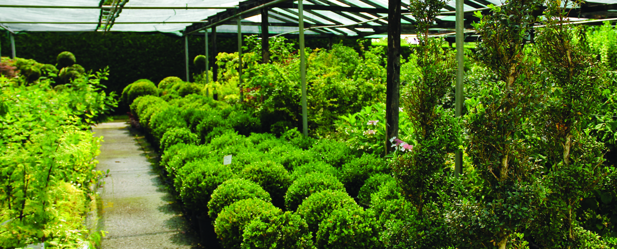 Piante tropicali da giardino piante da giardino for Vendita piante da giardino