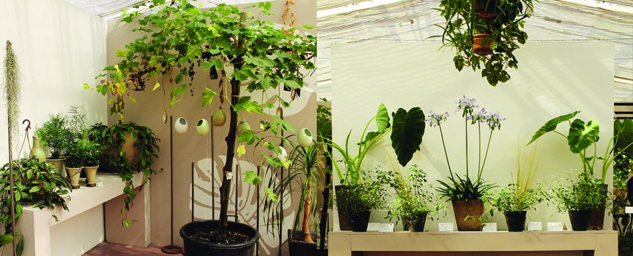 Piante fiori interni venezia gardin piante for Piante da interno profumate
